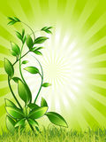 Plant, Green, Growing, Resistance Stock Photography