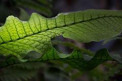 Plant. Green healty plant flower art macro Stock Photography