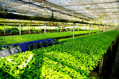 Plant green house flower nursery Stock Image
