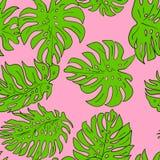 Plant, Green, Leaf, Flora stock images