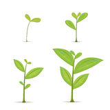 Plant Green Leaf Grow Set. Vector Stock Photography