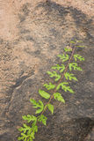 Plant green leaf on sand stone. Background Royalty Free Stock Image