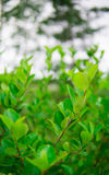 Plant with green leaves Stock Photo