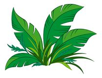 Plant with Green Leaves royalty free illustration