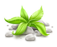 Plant with green leaves in stones Stock Photos