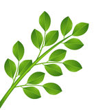 Plant with green leaves Stock Images