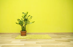 Plant in green room Royalty Free Stock Image