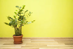 Plant in green room Royalty Free Stock Photo