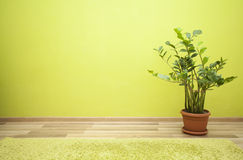 Plant in green room Stock Image