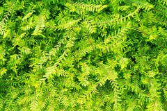 Plant green shrub in garden Stock Photo