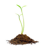 Plant Green sprout growing Royalty Free Stock Photos