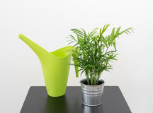 Plant and green watering can on a table Stock Image