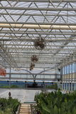Plant Greenhouse Stock Images