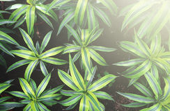 The plant in the greenhouse. Plants is a hobby which soothes Stock Photos