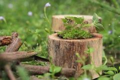 Plant gress houten leanscape kleine bloemen royalty-vrije stock afbeeldingen