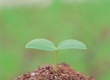 Plant on Ground Royalty Free Stock Image