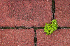 Plant groving through the pavement Stock Image