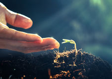Plant grow and bokeh background , concept. Business stock photo