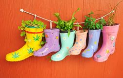 Plant grow in the boots Stock Photo