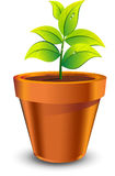 Plant grow in brown pot. Green leafy plant grow in brown pot isolated on white background Royalty Free Stock Photos