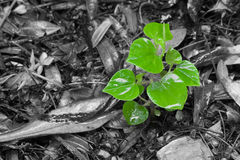 Plant grow Royalty Free Stock Image