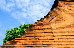 Plant grow on old red brick wall in front of blue sky Stock Photos