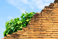 Plant grow on old red brick wall in front of blue sky Royalty Free Stock Photography