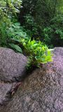 Plant grow in rock stock image