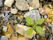 Plant grow on rocks Stock Photo
