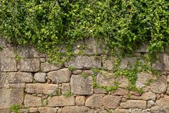 Plant grow on top of wall Royalty Free Stock Photo