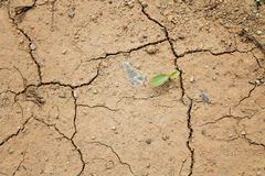 Plant grow up on cracked ground Stock Photo