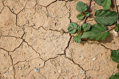 Plant grow up on cracked ground Royalty Free Stock Photos