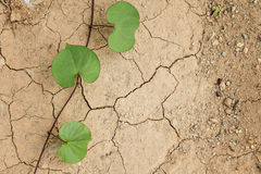 Plant grow up on cracked ground Stock Images