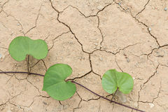 Plant grow up on cracked ground Royalty Free Stock Images