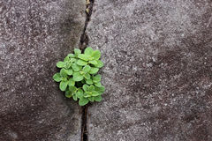 Plant grow up on cracked stone Stock Photo