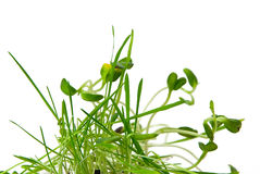 Plant growing Stock Photography