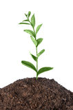 Plant growing Stock Images