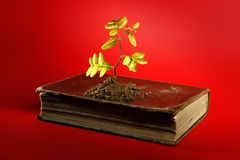 Plant growing from aged old book. Birth concept, red background Stock Images