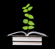 Plant growing from book. Plant growing from an open book Stock Photo