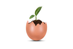 Plant Growing in Broken Egg Stock Images