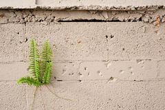 Plant Growing from Cement Wall Stock Image