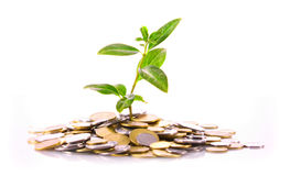 Plant growing from coin pile Stock Image