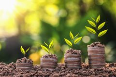plant growing on coin stack with sunset. concept saving money Stock Photos