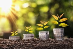 plant growing on coin stack with sunset. concept saving money an Stock Image