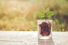 Plant growing from coins concept stock photo