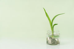 Plant growing on coins Royalty Free Stock Photos