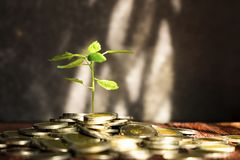 Plant Growing From the Coins. Concept Picture of Saving or Busin stock photo