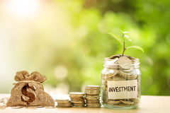 Plant growing  in Coins glass jar with investment paper label fo Stock Photos
