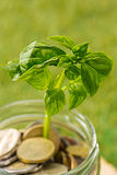 Plant growing in Coins glass jar for money on green grass Stock Photography