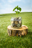 Plant growing in Coins glass jar for money on green grass Royalty Free Stock Photography